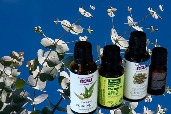 plantas medicinales para limpiar los pulmones