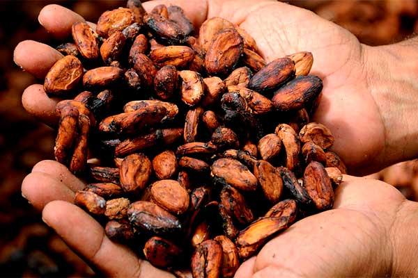 bebida-energetica-natural-con-cacao